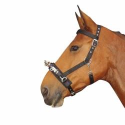 Caveçon Harry's Horse Cheval