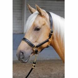 Licol en cuir Harry's Horse Or Cheval