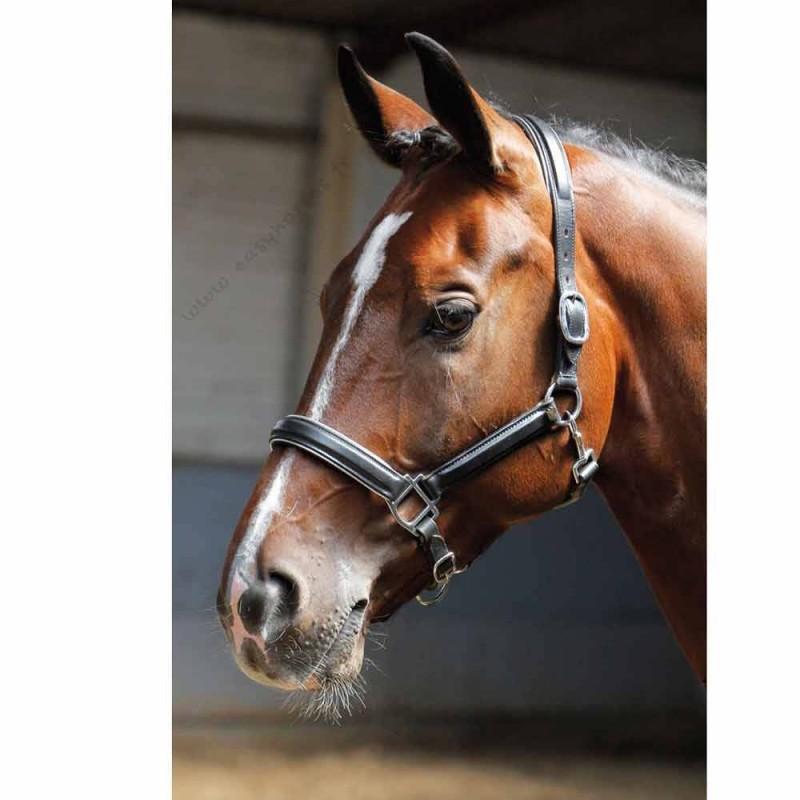 Licol en cuir Harry's Horse Argent Cheval