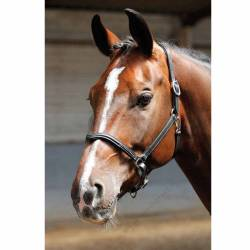Licol Harry's Horse Crystal V Cheval